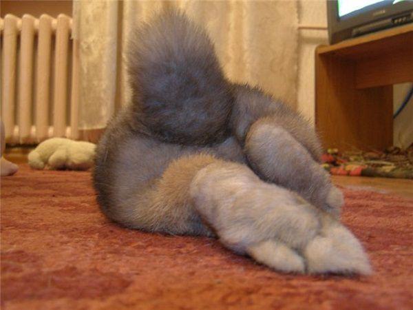Половое созревание толкает кролика на бунт против лотка
