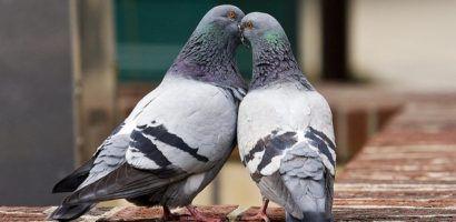 Где купить суставит для голубей чистка суставов дома