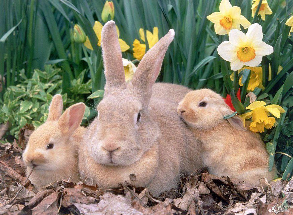 Молочная кислота для кроликов и других животных – купить в.