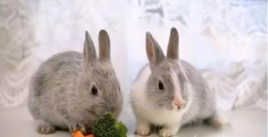 Еда у кроликов всегда должна быть свежая