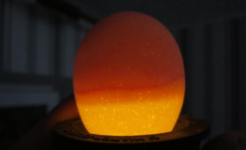 Полноценное яйцо при просвечивании