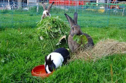 Кролики должны питаться по графику