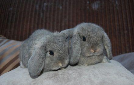 Появление второго питомца заставит кролика переживать