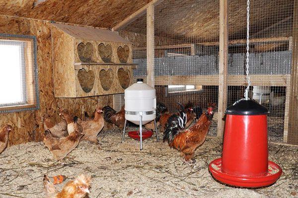 Курятник, организованный с учетом норм содержания кур