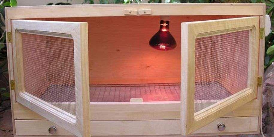 Брудер создается на основе деревянного ящика и лампы для подсветки