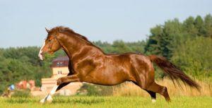Лошадям требуется регулярный выгул