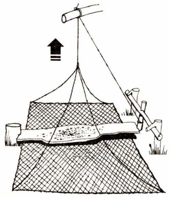 Схема ловушки пернатых с использованием рыболовных сетей