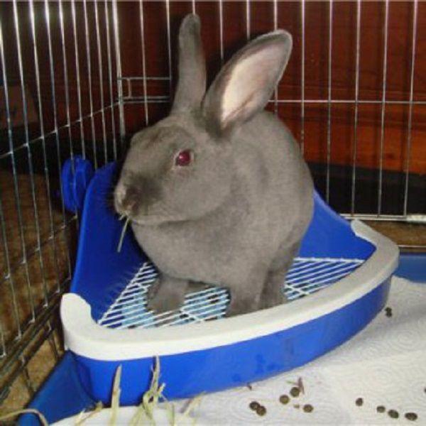 Угловой лоток - удобная вариация кроличьего туалета