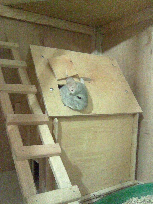 Лесенка в домике