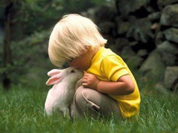 Общение необходимо кроликам