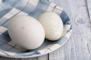 Сравнение утиного и куриного яичек