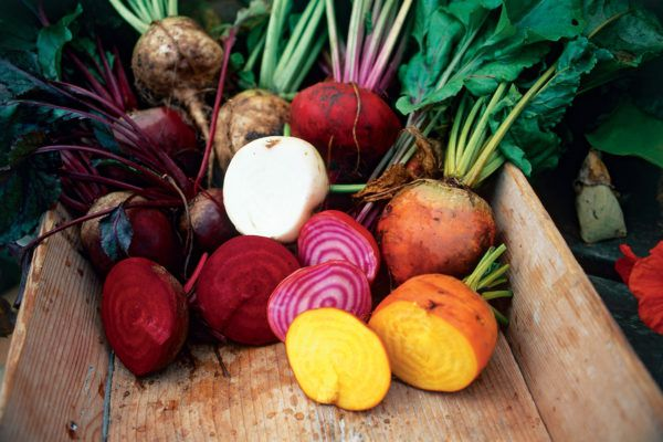 Свекла, редька, морковь - всем этим можно кормить лебедей