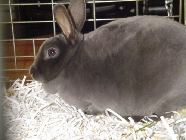 Беременным крольчихам необходим особый уход