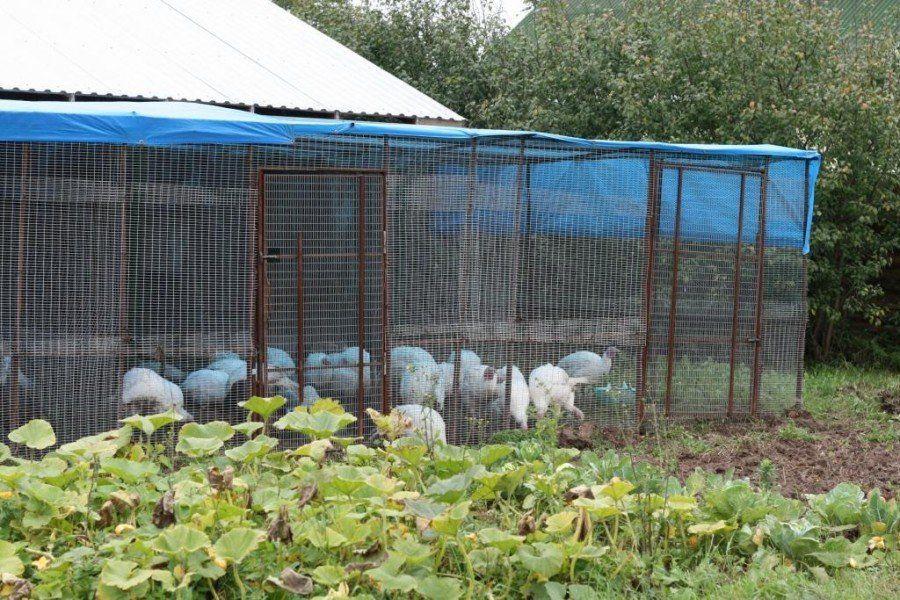 Крышу лучше накрыть пленкой, чтобы осадки не промочили птиц и подстилку