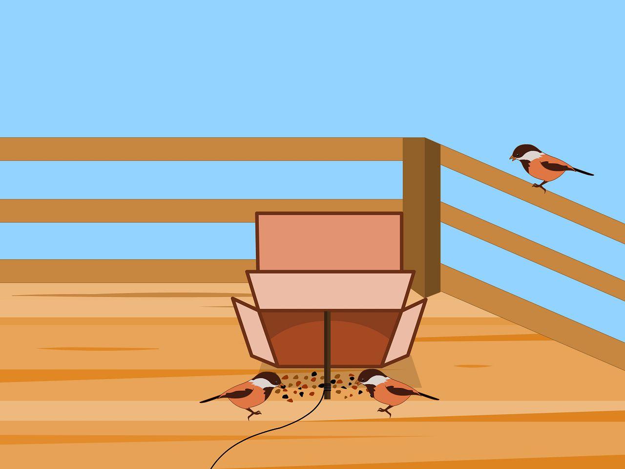 Стандартная схема ловли городских птиц