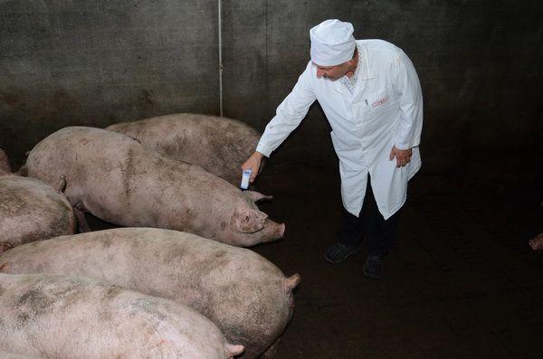 Если мясо пойдет на продажу, обязателен ветеринарный осмотр