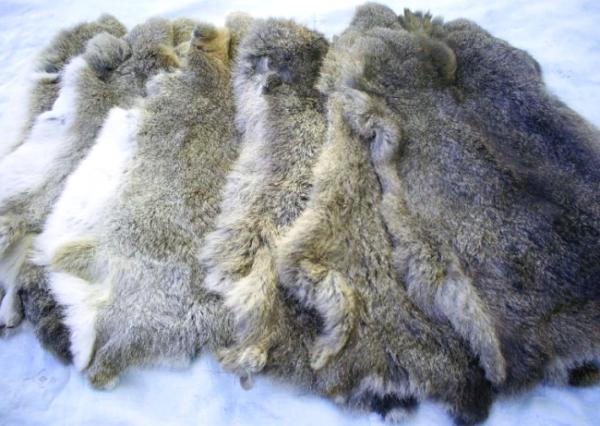 Кроличьи шкуры