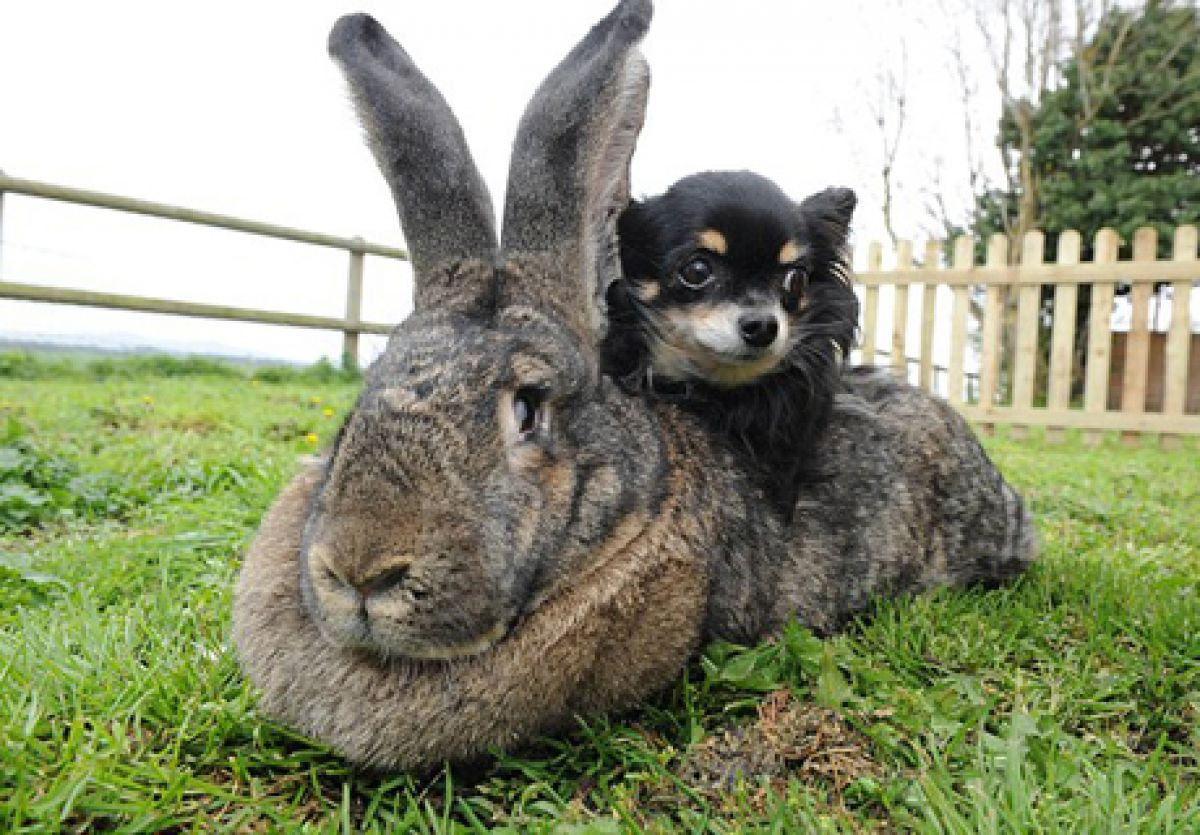 Кролики никогда не должны испытывать недостаток в еде