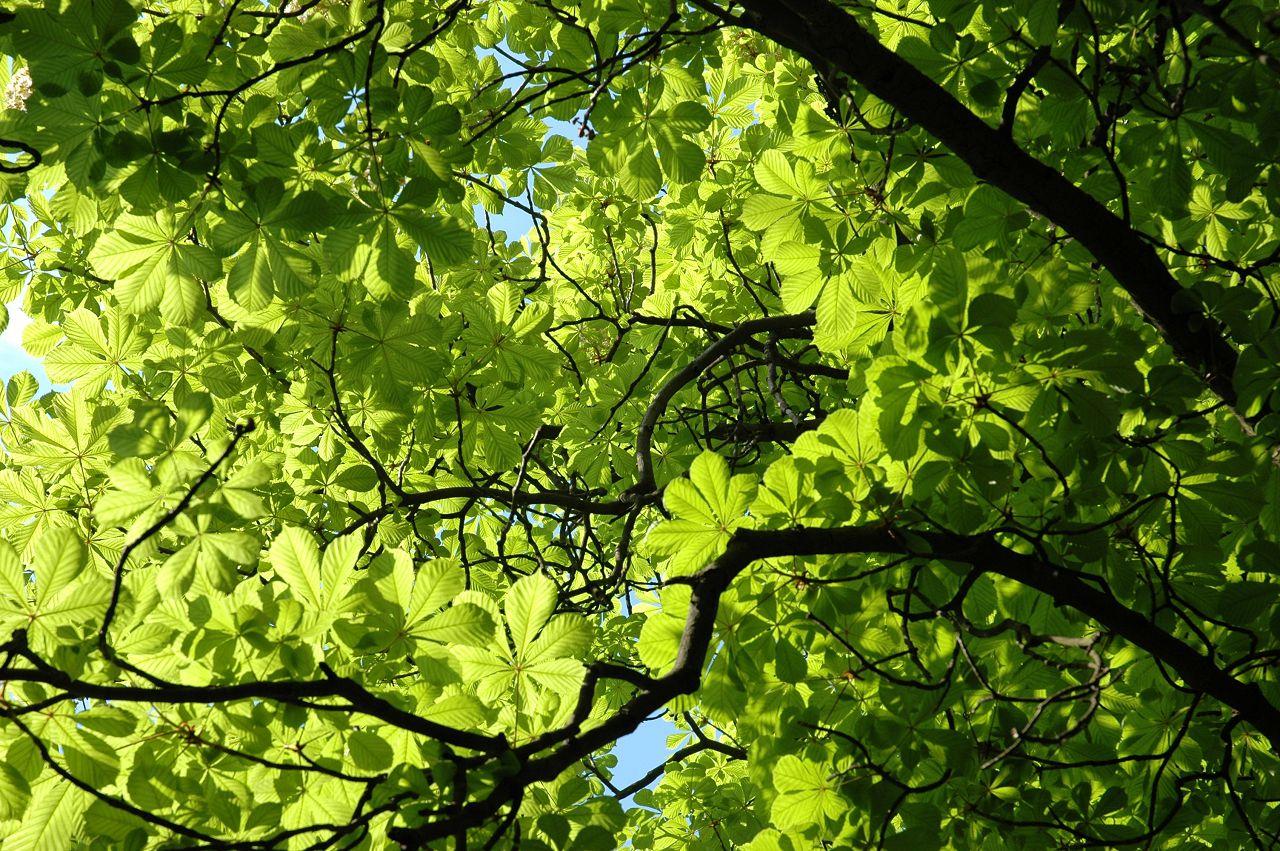 Предпочтение необходимо отдавать веткам с сочными листьями