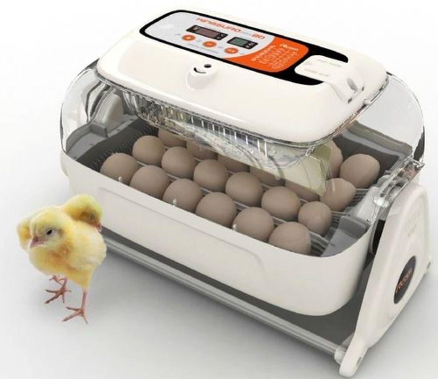 Учитывая отсутствие инстинкта высиживания, приобретение инкубатора поможет вырастить птенцов