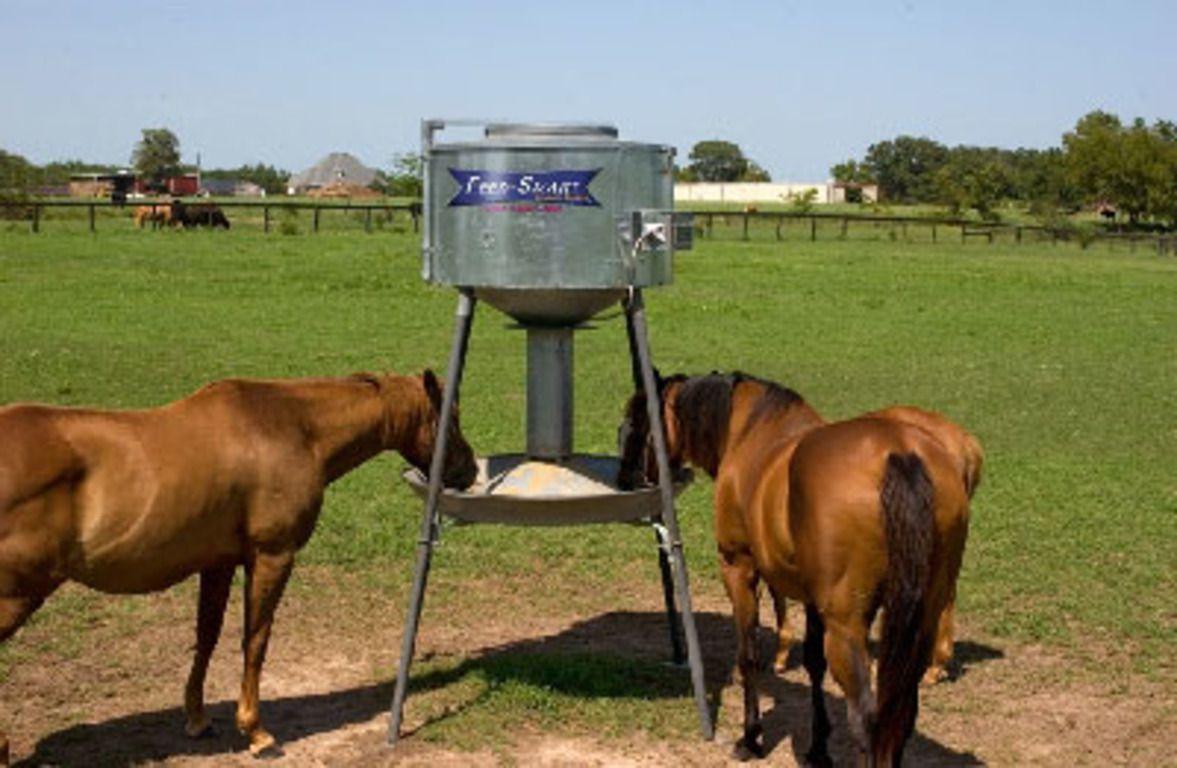 При условии соблюдения четкого графика кормления у лошадей будет вырабатываться пищеварительный сок, улучшающий процесс усвоения корма