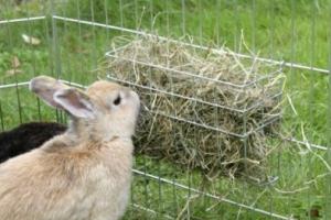 Картинки по запросу кормушки для кроликов