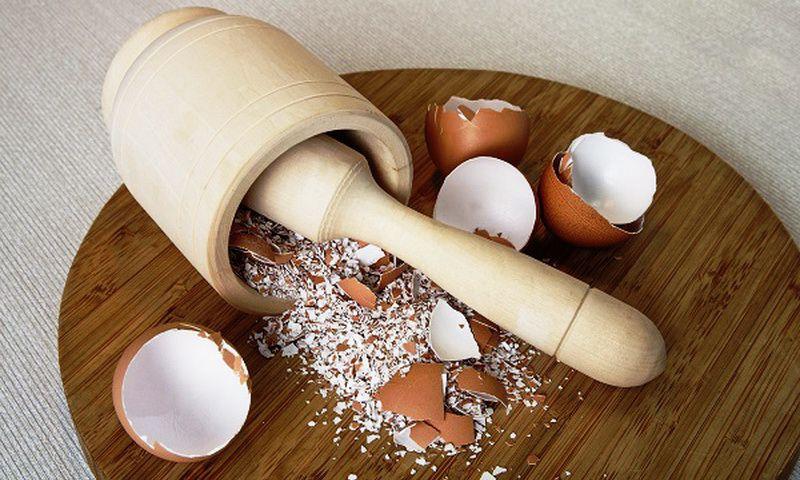 Яичную скорлупу необходимо мелко покрошить, как и другие твердые ингредиенты корма