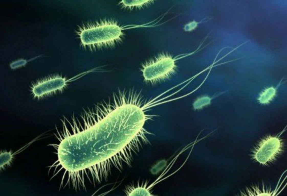 Чтобы образовались новые популяции бактерий, необходимо 14 дней