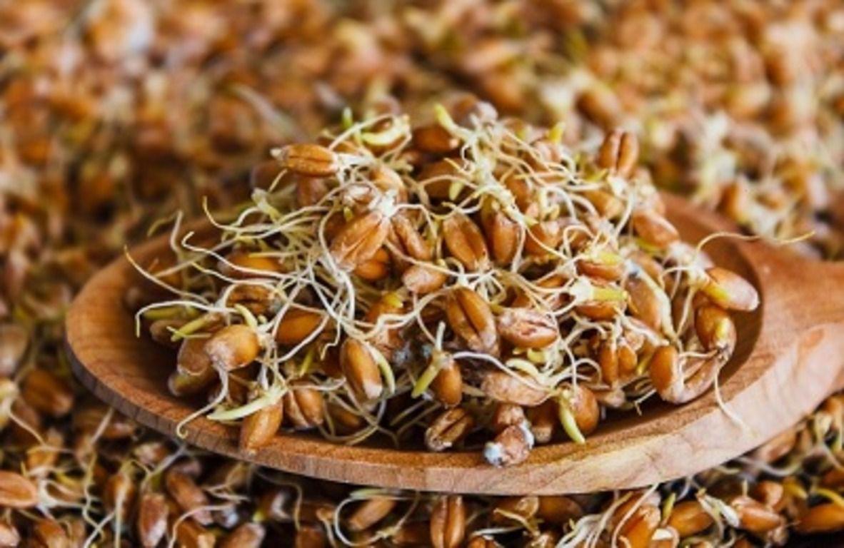 Запаривание является популярным способом заготовки пророщенного зерна
