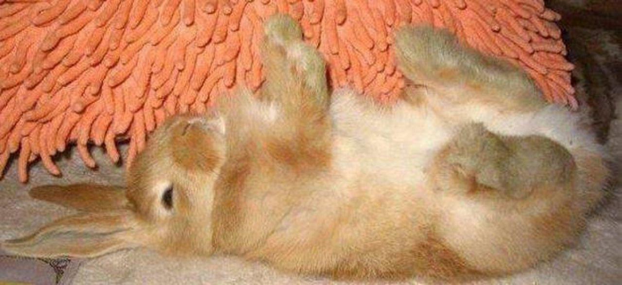 Степень насыщения крольчонком пищей можно определить по гладкому животику