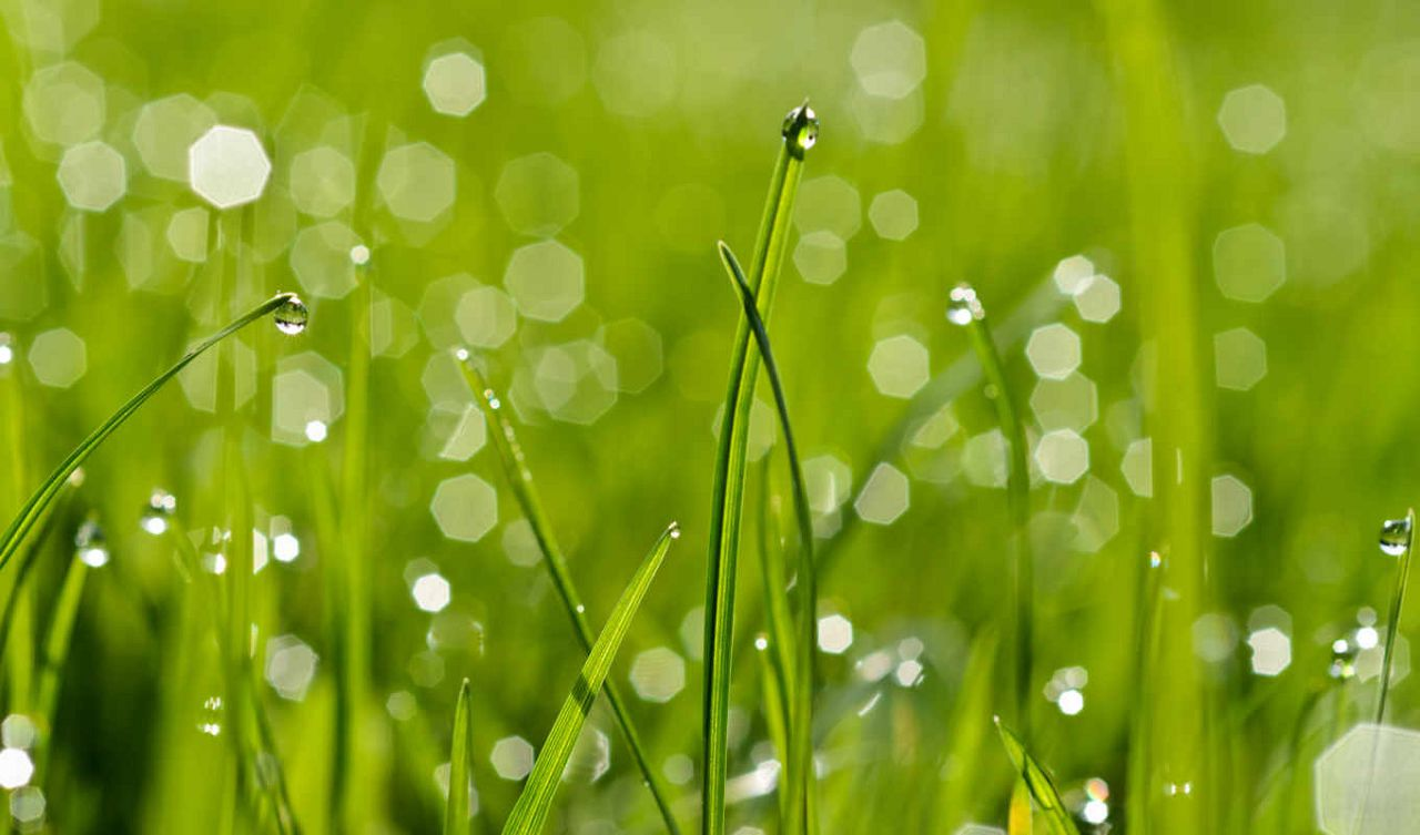 Кроликам не рекомендуют давать мокрую траву