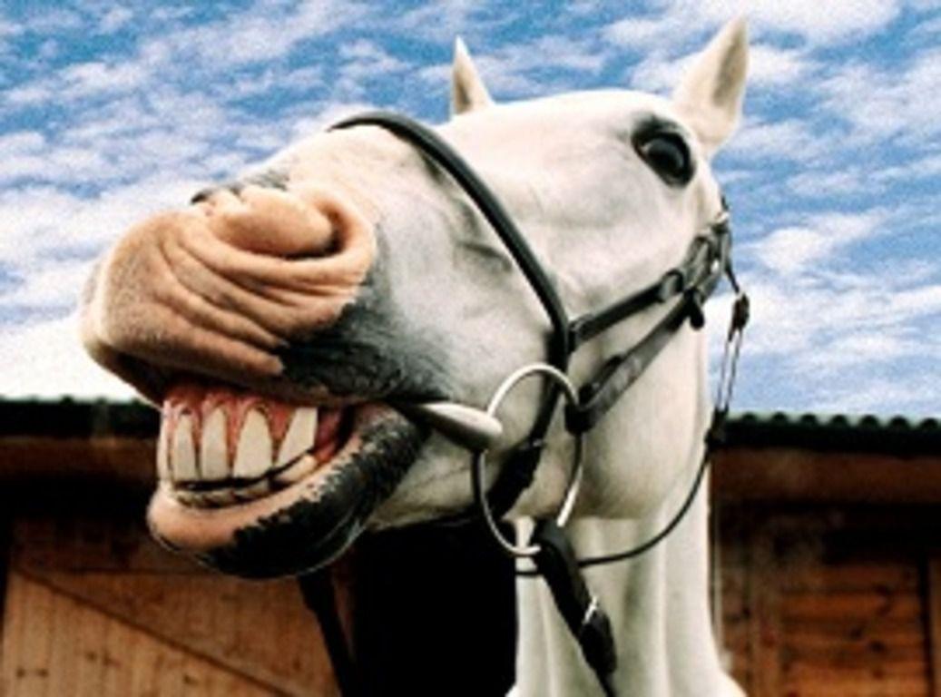 У лошади должны быть здоровые зубы