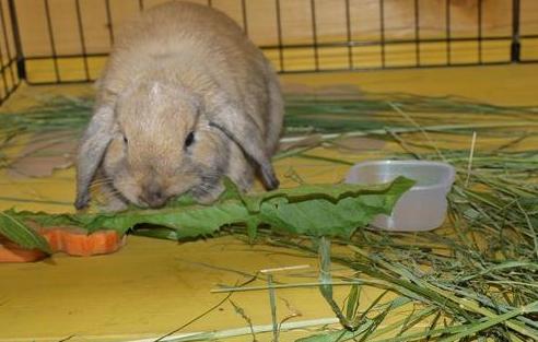 Трава в питании кроликов