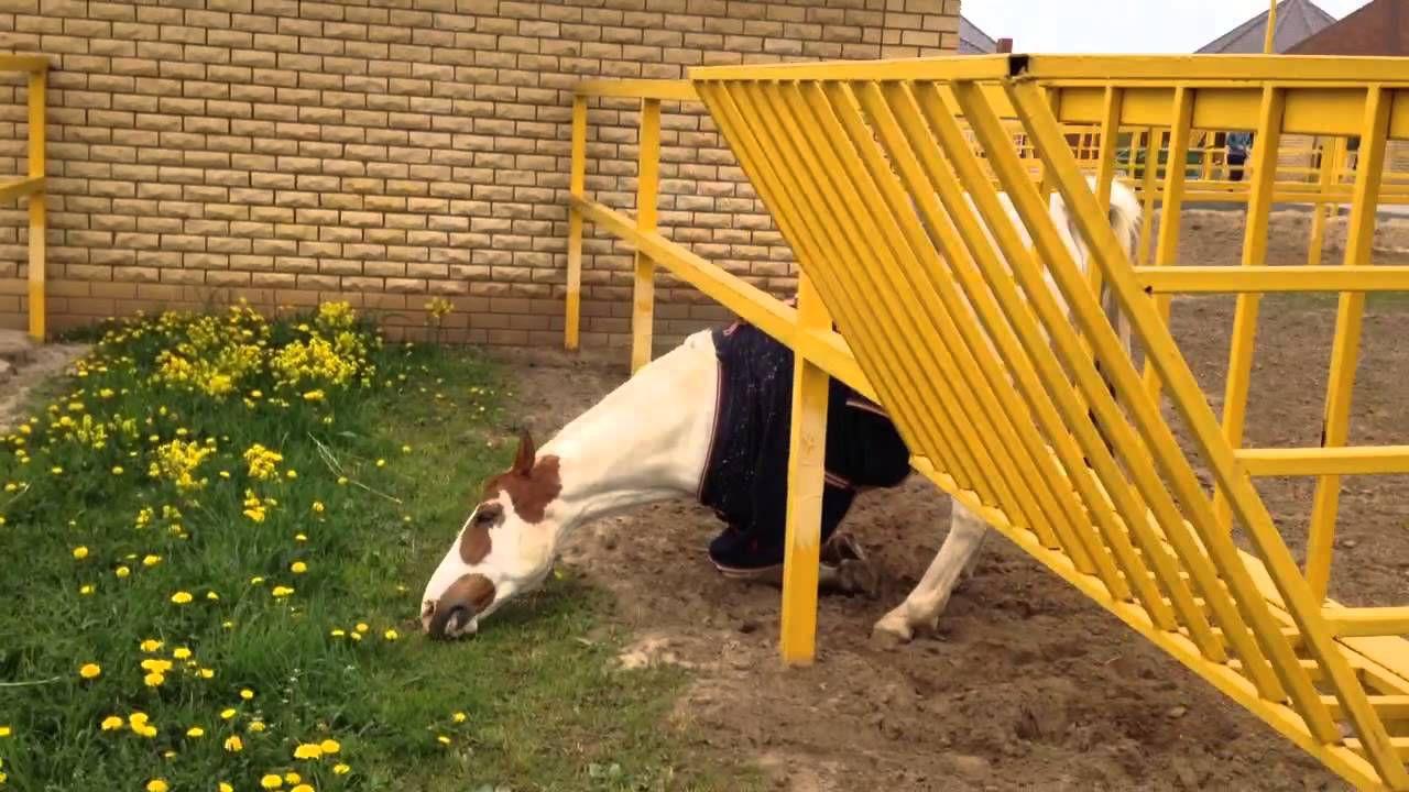 Образцового рациона, подходящего каждой лошади, не существует: следует придерживаться индивидуального подхода