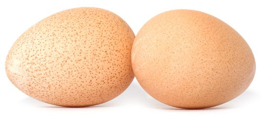 Яйца для инкубации должны быть одинакового размера