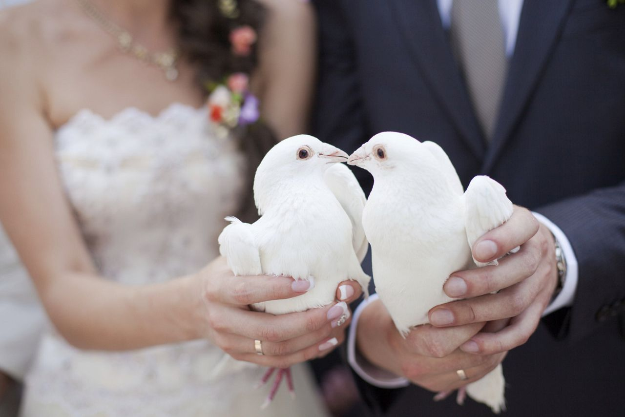 Голуби - символ верности и вечной любви