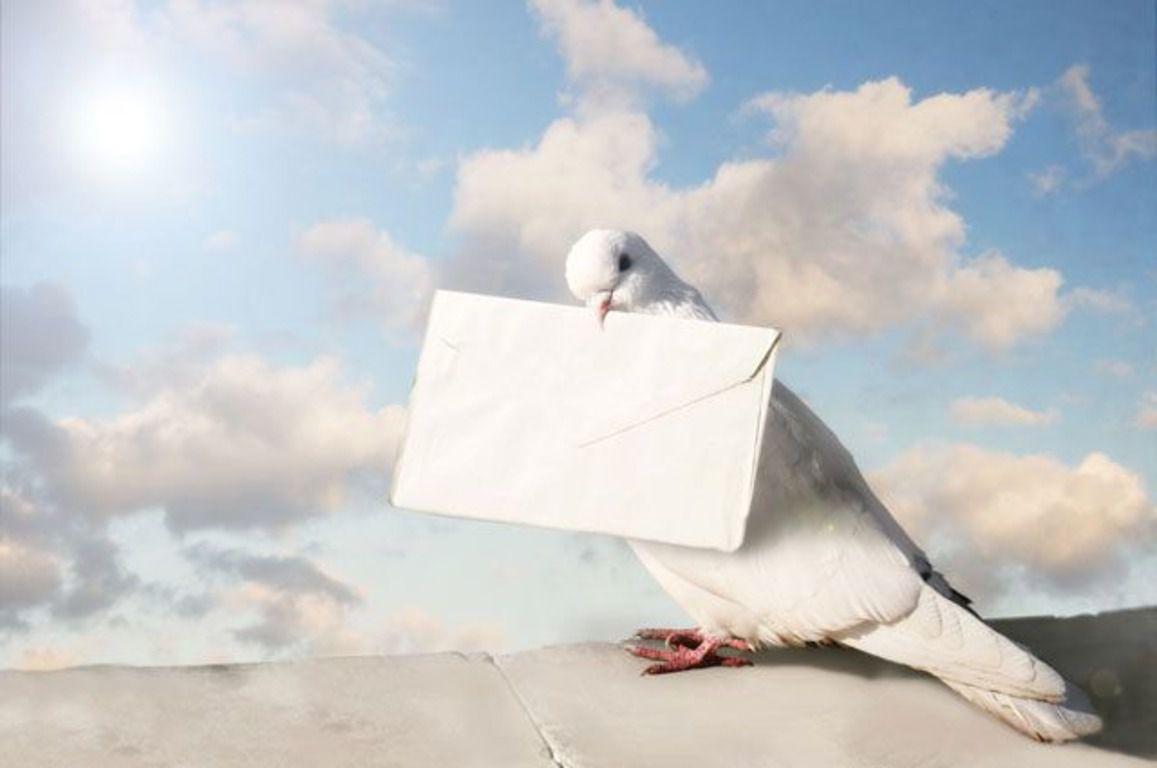 Феноменальная способность голубей возвращаться к своему гнезду раньше использовалась в курьерских целях