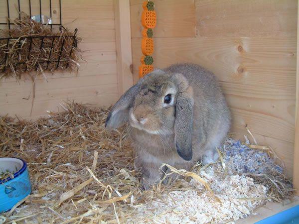 Правильный уход - залог здоровья кролика