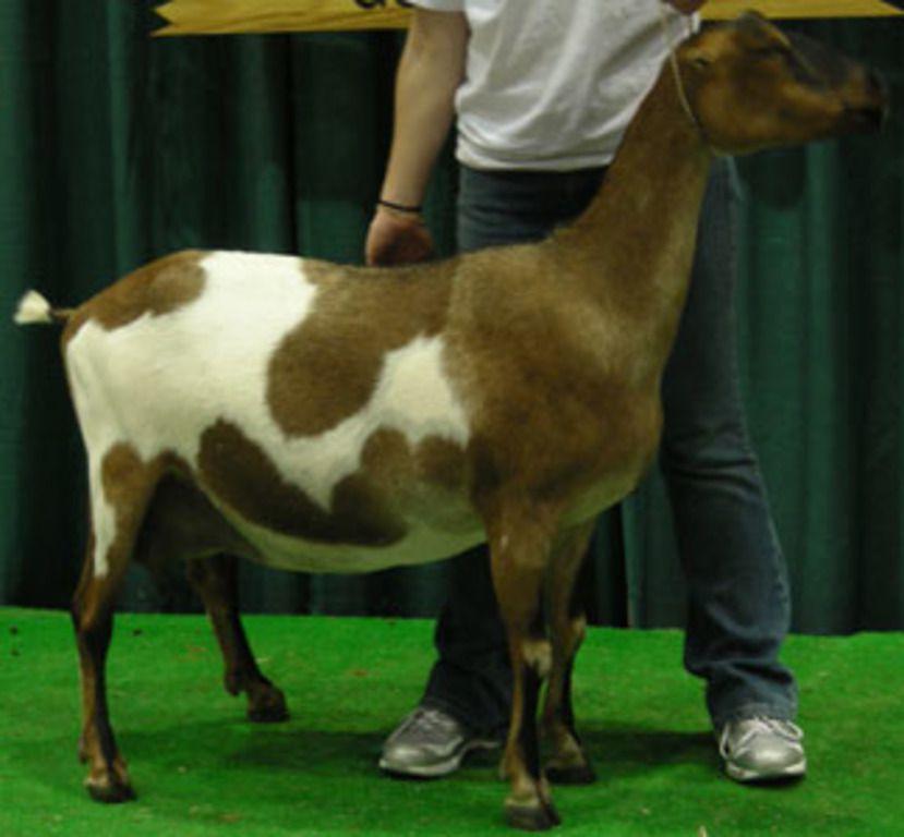 Обычно шерсть животных состригают: так они выглядят симпатичнее и ухоженнее