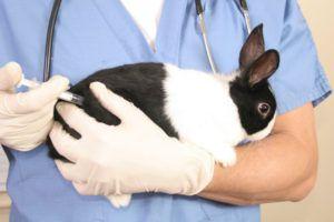 Кроликов необходимо прививать