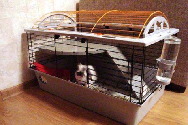 Клетку кролика лучше разместить в тепло и сухом углу квартиры