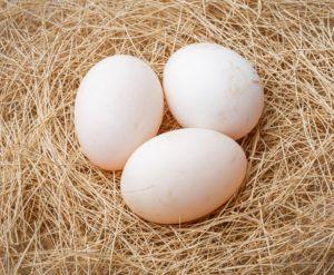 Для проверочной кладки хватит 3 яичек