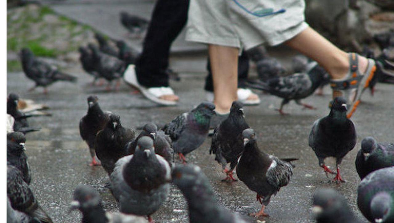 Голуби отдают предпочтение местам с большой численностью людей