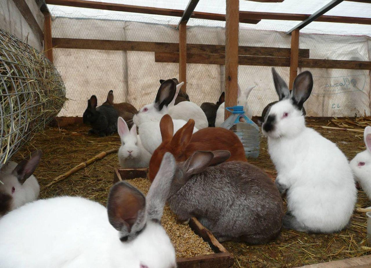 Содержание кроликов в общем помещении