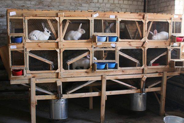 Полы кроличьих клеток на фермах должны легко сниматься