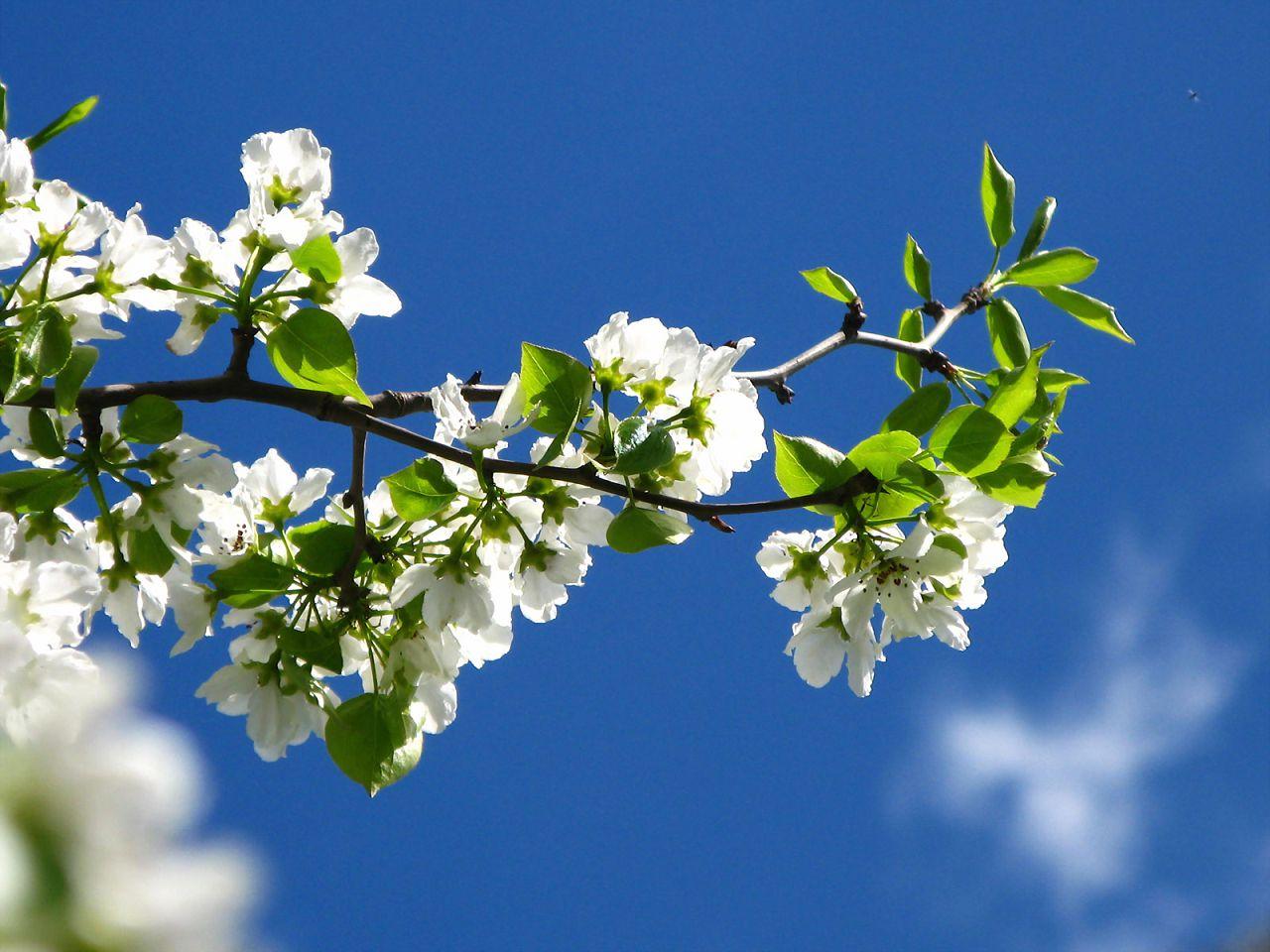 Яблоневая ветка — одна из самых востребованных в рационе ушастых