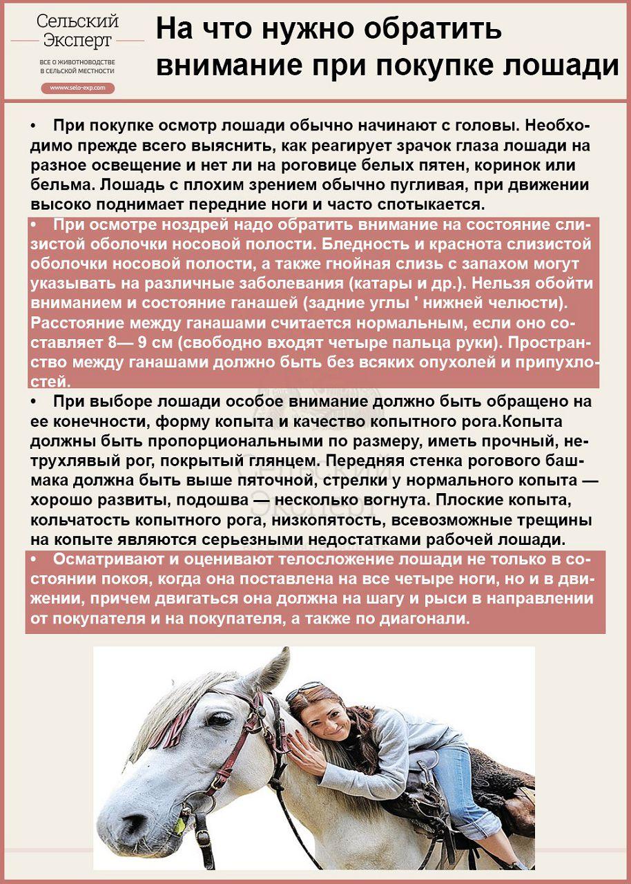 Как выбрать хорошую лошадь