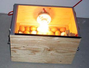 Инкубатор из деревянного ящика