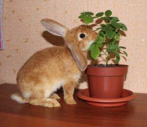 Можно прикормить кролика листьями