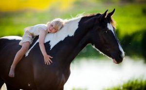 Порода лошади не имеет значения